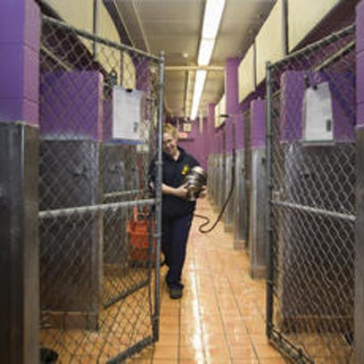 An Ingham County Animal Shelter employee works in one of the facility's holding areas. Voters will consider a property tax millage during the Aug. 2 primary election.