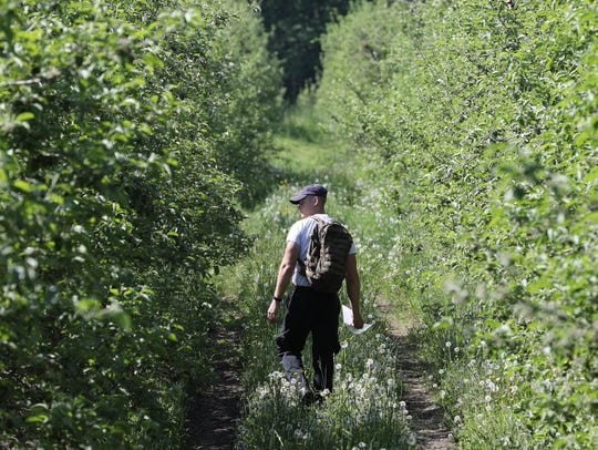 Searchers in apple orchards looking for a 14-month-old