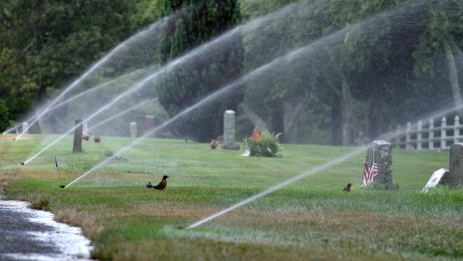 Robins gather for a free shower as the irrigation system keeps the grass green at the Mosswood Cemetery in Cotuit.