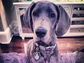 Kendall Jenner was gifted Blu, this stoic Great Dane, for her 18th birthday.