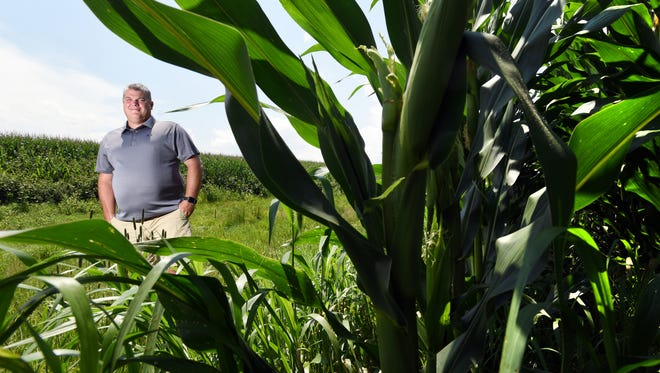 Matt Bell stands in the conservation easement between corn fields on his farm near Zanesville recently. The new Current Agricultural Use Value (CAUV) formula eases the tax burden on conservation land.