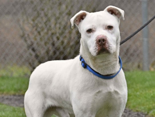 Rumba is a 1-year-old Bulldog mix. Call Marion County