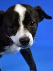 Oreo, originally in a Phoenix shelter, found a home