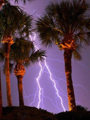 FILE- Lightning strikes between palm trees.