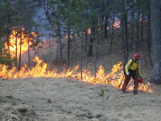 A firefighter uses a drip torch to make a fire line