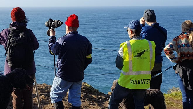 Whale Watching Week: Within the next four days, head to the coast to potentially catch a glimpse of the estimated 20,000 whales heading south for Winter, volunteers from the Whale Watching Spoken Here program will be stationed at 24 sites along the coast to offer tips on watching and facts about whales, 10 a.m. to 1 p.m. Thursday to Sunday, Dec. 28-31, visit whalespoken.wordpress.com to find volunteer whale watch sites.