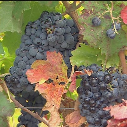 Wine is Idaho's fastest-growing agricultural industry,