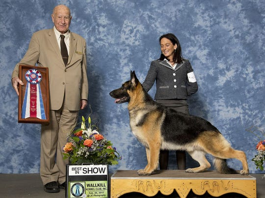 Fanucci, a 5-year-old German shepherd co-owned by Milton's Stephanie Schrock, is shown with handler Susan Condreras at the Wallkill Kennel Club show in February 2017.(Submitted photo)