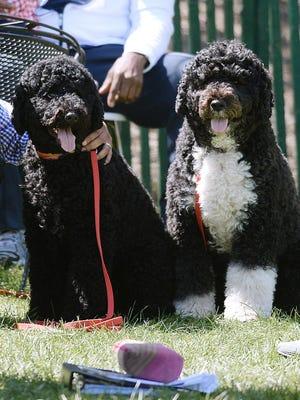 President Obama's dogs Sunny and Bo.