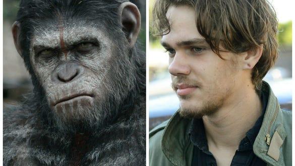 Apes/Boyhood