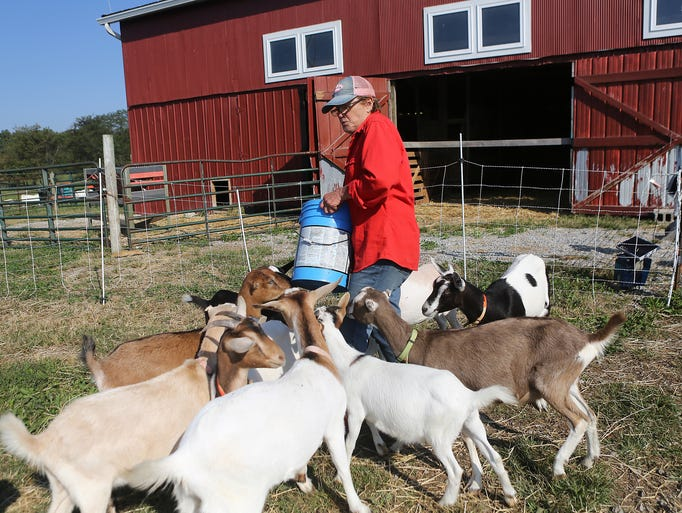 Gayla Fritzhand works on her goat farm in West Union, Ohio.  Fritzhand owns JZN Goat Farm, which is a 126 acre farm where she raises goats and grows alfalfa and wheat.  This Sunday six female farmers in this region are being honored, including Fritzhand.