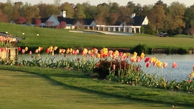 Tulips line the 18th tee box at Baywood Greens in Delaware.