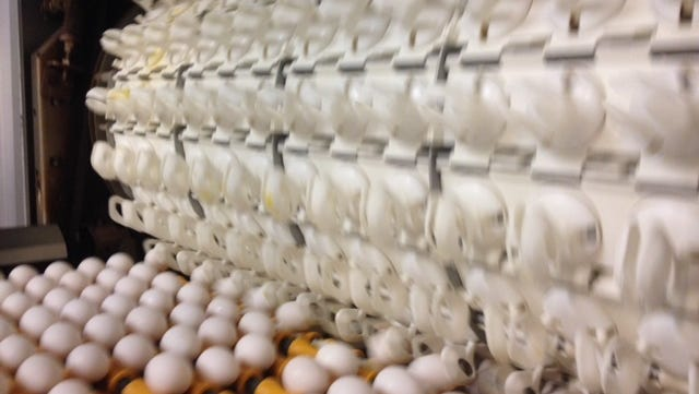Eggs at the Hickman's Family Farms factory.
