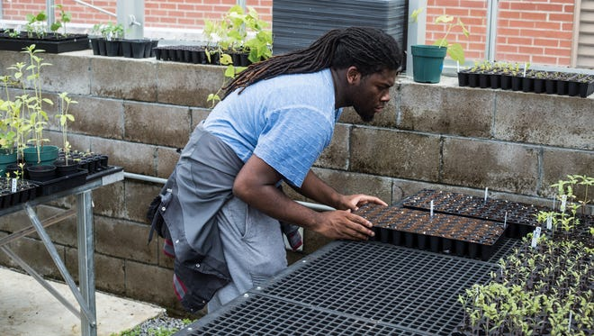 April 13, 2018 - EJ Akins, a junior at Bolton High School, works to plant new seeds in the greenhouse at Bolton High School. Akins is starting seedings for two community gardens as well as plots around the high school. Shelby County Schools is planning to spend $8 million revamping its career and technical education programs to better align with the jobs available today.