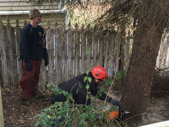 Workers from Barrett's Tree Service cut the base of