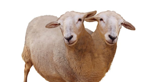 Two-headed animals were among the oddities that were part of the sideshow at state fairs in the 1970s.