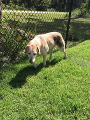 DO YOU KNOW ME? I was found around 8th Avenue SE in