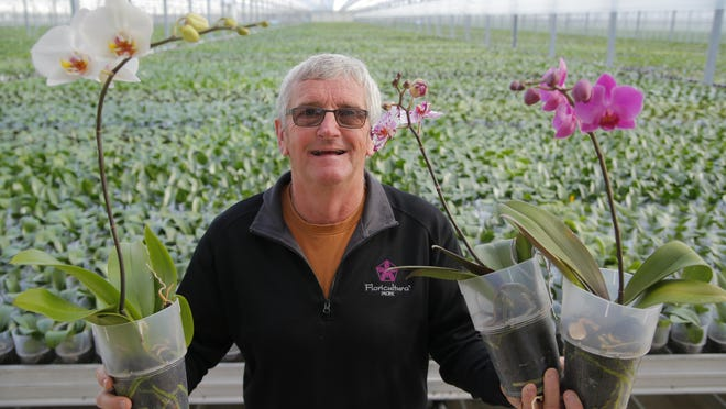 Floricultura Pacific general manager Don Howell holds orchids inside at their greenhouse on Wednesday in Salinas.