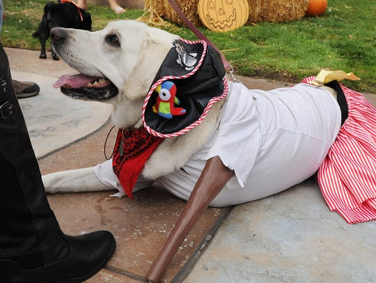 Eva, a three-legged yellow Labrador retriever dressed as a peg-leg pirate, competes in a past Howl-O-Ween costume contest at Ventura Harbor Village. This year's contest will take place at noon Oct. 21.