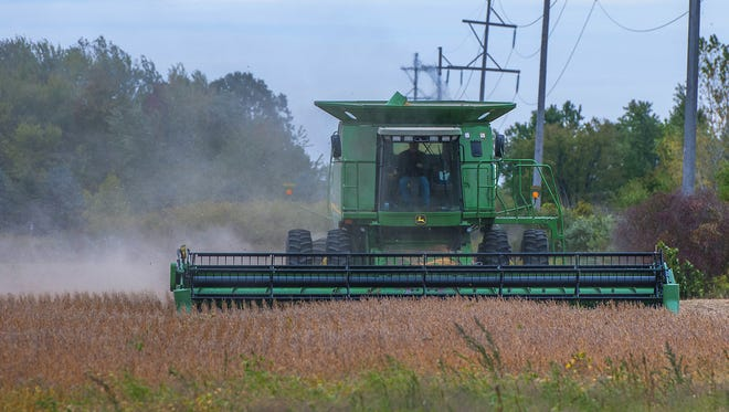 A farmer harvests a plot of beans near in St. Johns. The yields for both corn and soybeans have been higher than expected.
