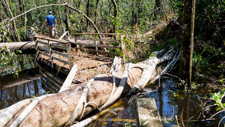 Corkscrew Swamp Sanctuary's ancient forest heavily damaged by fallen trees during Hurricane Irma