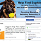 A lost dog, a demanded donation: Lancaster County nonprofit's practices spark outrage