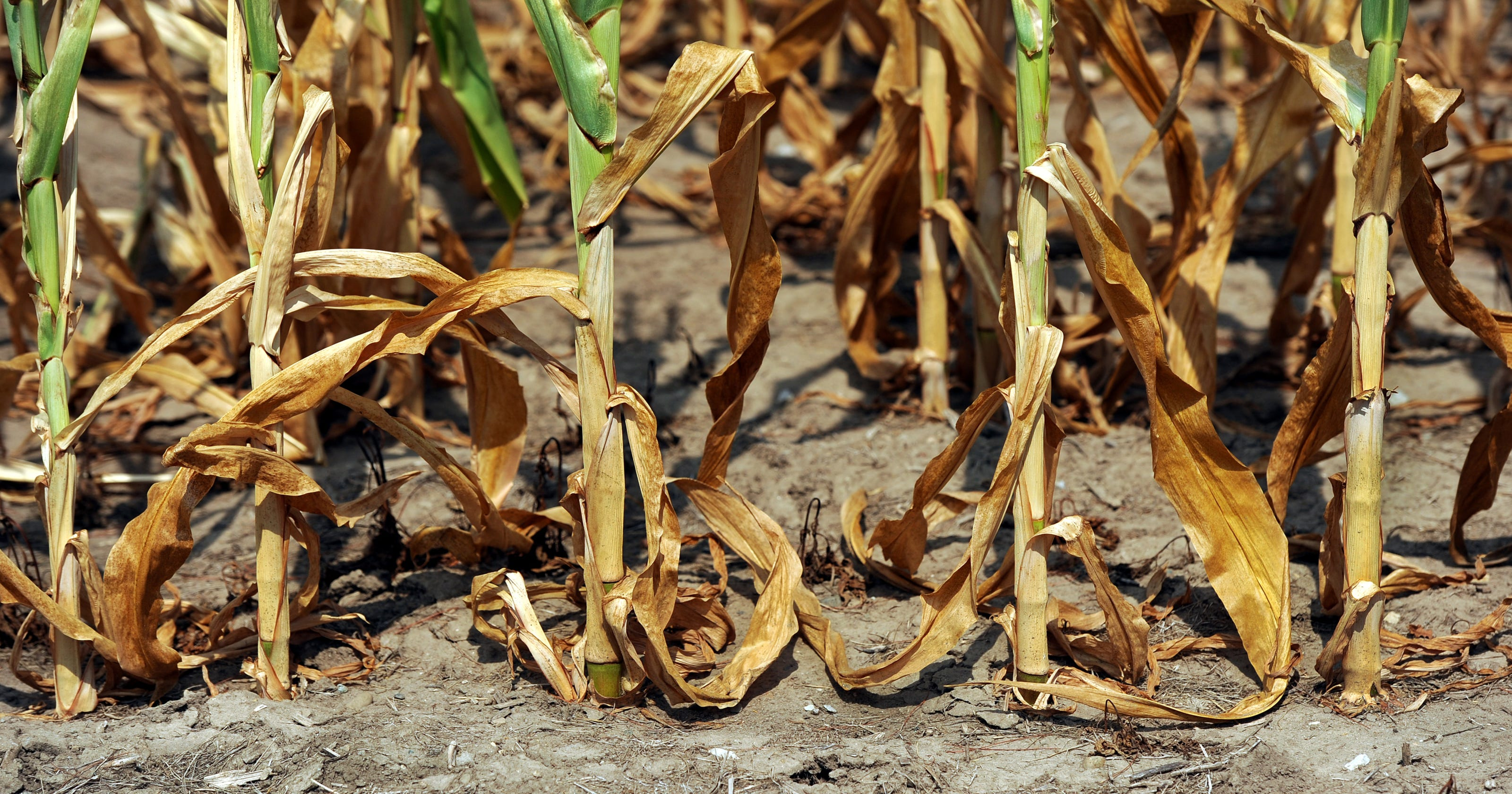 Climate change could impact these Indiana crops