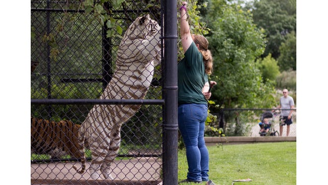 Zoo keeper Becky training Aurora