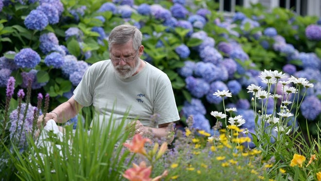 Church sexton Tom Benoit casts a discerning eye looking for weeds among the flower beds outside the entrance to the West Barnstable First Lutheran Church.