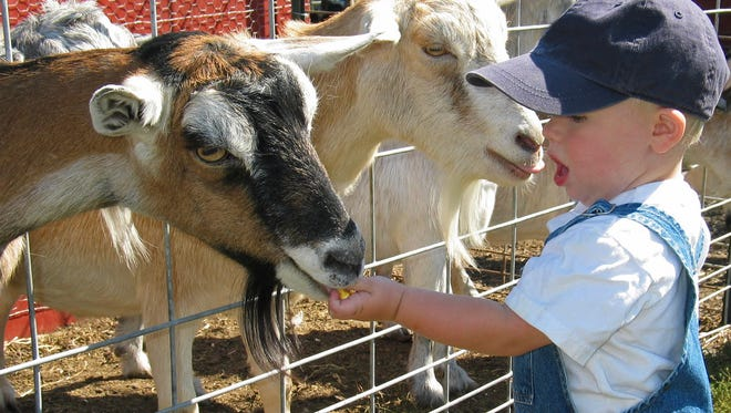 A petting zoo was listed as a tax deduction for a direct sales home-based business. Positioned strategically on the tax return with very visible notes to be seen upfront, this deduction continued to be accepted by the IRS for numerous years.