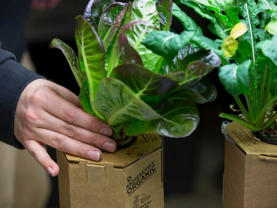 Lettuce at Aggressively Organic, a new start-up in