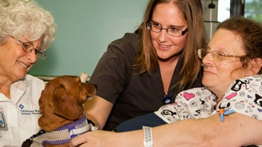 Animal Therapy Program