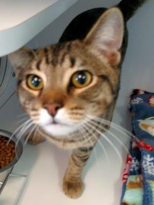 Matt is the Current-Argus pet of the day.