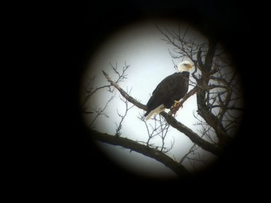 BUR20160109-DigiScope-Eagle.JPG