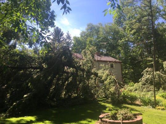 Rusch tree