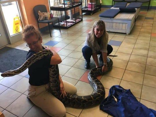 636379739442822027-Huge-snake-2.jpg