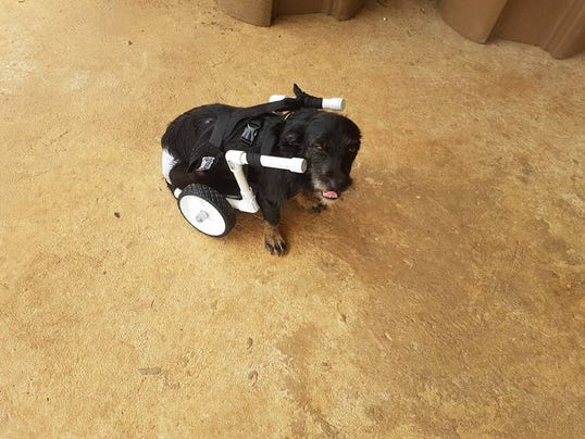 636583815098436171-injured-dog.jpg