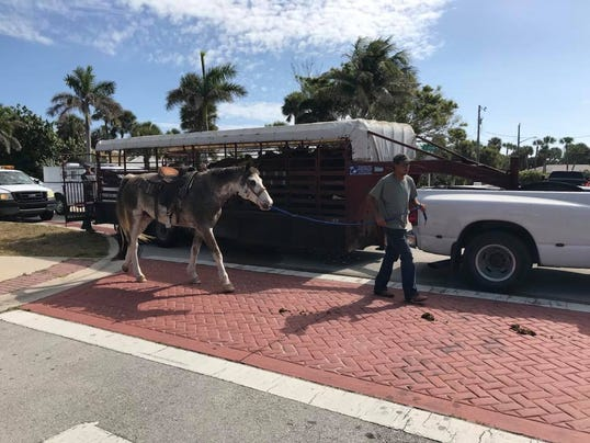 One horse dead, another injured after crash
