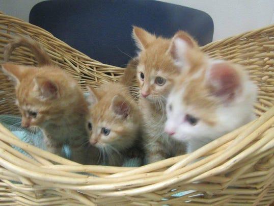 636620530769976648-kittens.jpg