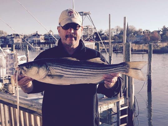 Delaware regional fishing report for Lewes harbor marina fishing report