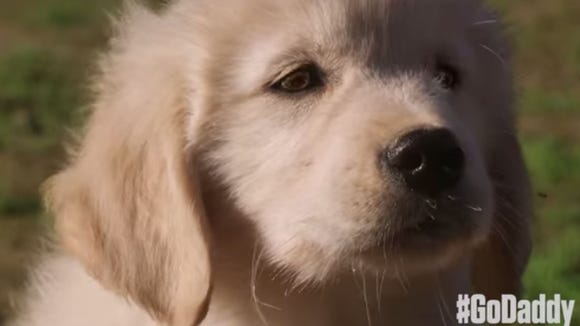That face! Don't worry, GoDaddy hasn't gone soft with its new Super Bowl Commercial featuring this puppy.