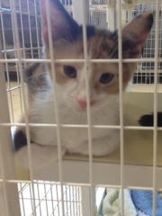 A kitten peers out of its cage at the South Wood County