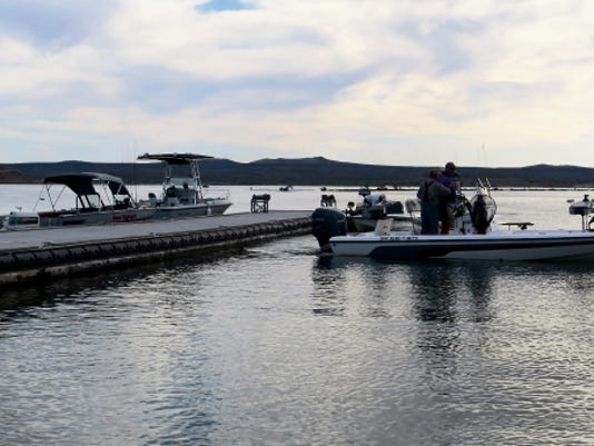 Volunteers on Wednesday helped restock Elephant Butte lake with 20,000 largemouth bass.