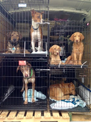 These dogs are leaving storm-ravaged Texas and headed to New Jersey with the help of Southern Paws, a Ringwood based volunteer group.