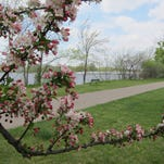 A tree blossoms and the Wisconsin River is visible in the background in this view from Edgewater Manor.