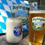 The honeyed malt of Ayinger Maibock will greet the nose.