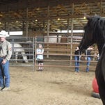 Adoption sale hosted for wild mustangs, burros
