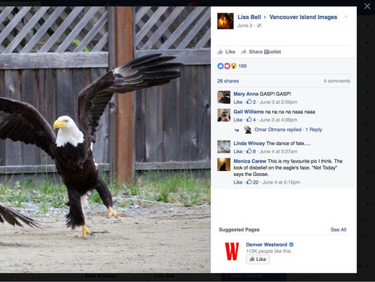 Canada Goose womens sale store - Woman captures epic battle between bald eagle and goose