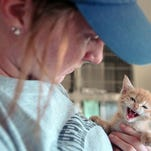 After the Mississippi Department of Health detected rabies in a kitten in Starkville, Rankin Count y will host a vaccination clinic Sept 5.