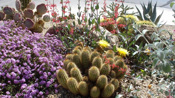 Desert landscaping adds color to a yard and provides